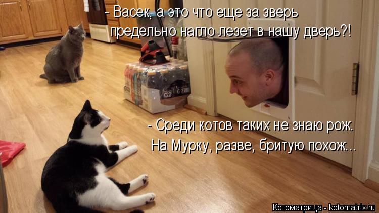 Котоматрица: - Васек, а это что еще за зверь предельно нагло лезет в нашу дверь?! - Среди котов таких не знаю рож. На Мурку, разве, бритую похож...