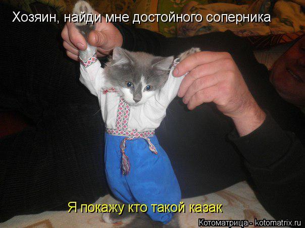 Котоматрица: Хозяин, найди мне достойного соперника Я покажу кто такой казак