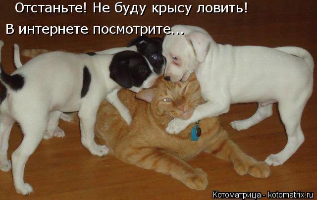 Котоматрица: Отстаньте! Не буду крысу ловить! В интернете посмотрите...