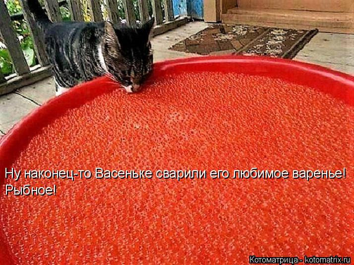 Котоматрица: Ну наконец-то Васеньке сварили его любимое варенье! Рыбное!