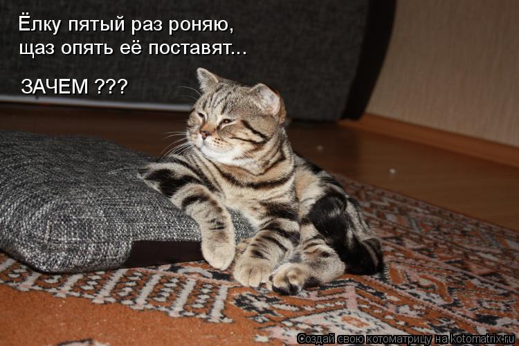 Котоматрица: Ёлку пятый раз роняю, щаз опять её поставят... ЗАЧЕМ ???