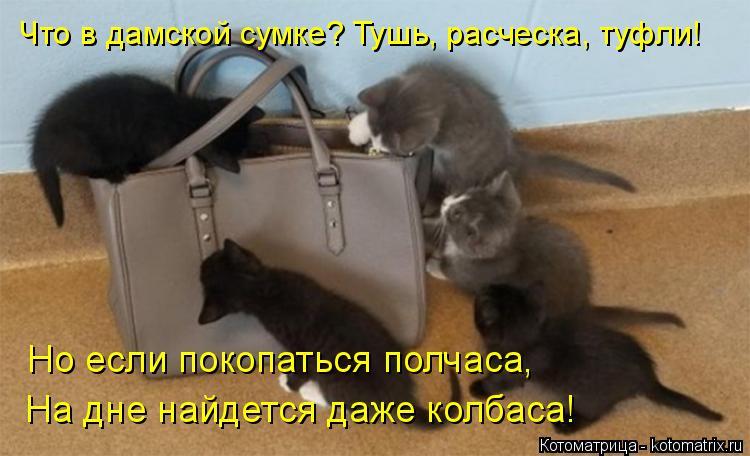 Котоматрица: Что в дамской сумке? Тушь, расческа, туфли! Но если покопаться полчаса, На дне найдется даже колбаса!
