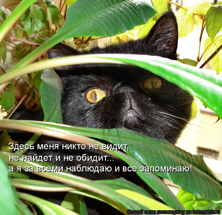 Котоматрица: Здесь меня никто не видит,   не найдет и не обидит... а я за всеми наблюдаю и все запоминаю!