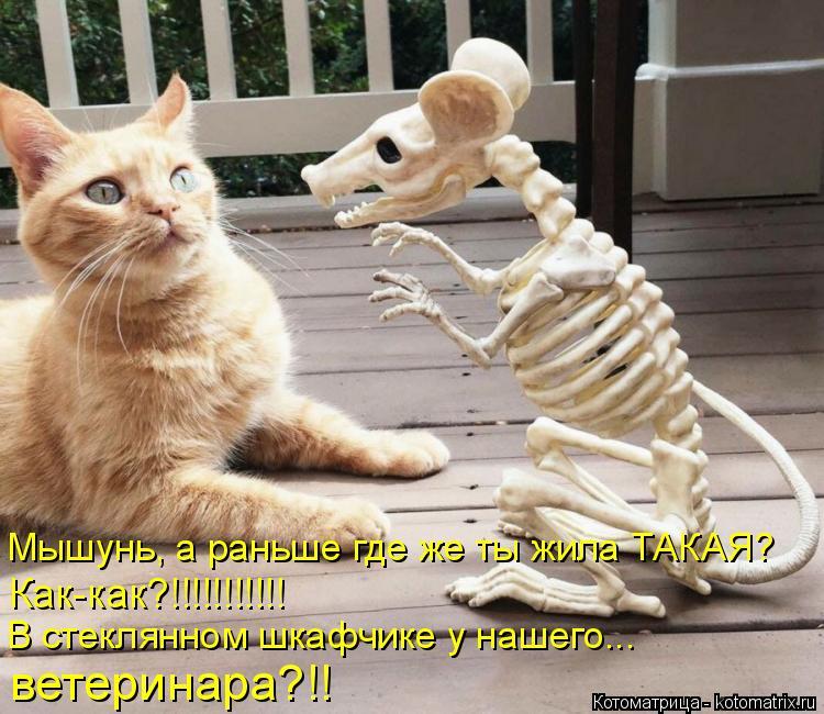 Котоматрица: Мышунь, а раньше где же ты жила ТАКАЯ? Как-как?!!!!!!!!!!! В стеклянном шкафчике у нашего... ветеринара?!!