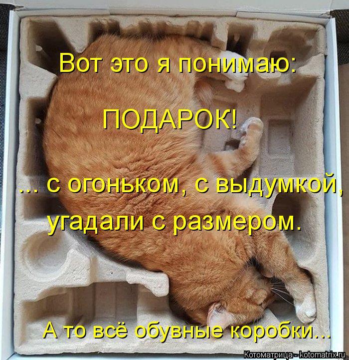 Котоматрица: Вот это я понимаю: ПОДАРОК! ... с огоньком, с выдумкой, угадали с размером. А то всё обувные коробки...