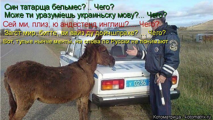 Котоматрица: Син татарща бельмес? .. Чего? Може ти уразумiешь украиньску мову?... Чего? Сей ми, плиз, ю андестенд инглиш? ... Чего? Загст мир, битте, ви вайз ду д?