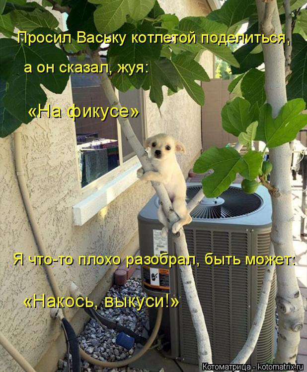 Котоматрица: Просил Ваську котлетой поделиться, «На фикусе» Я что-то плохо разобрал, быть может: «Накось, выкуси!» а он сказал, жуя:
