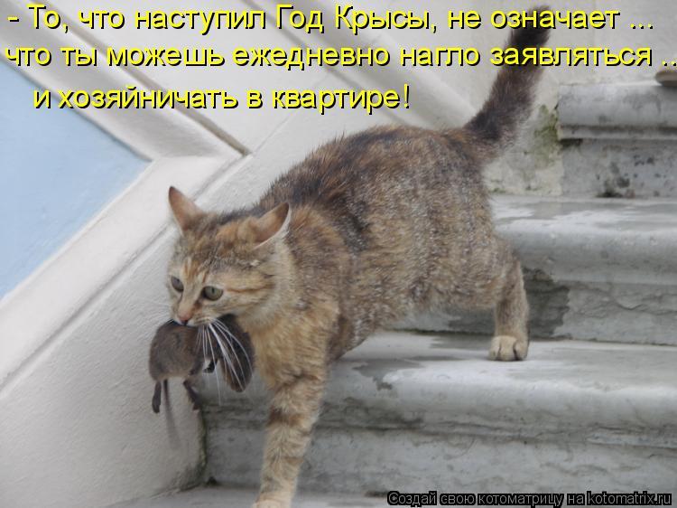 Котоматрица: - То, что наступил Год Крысы, не означает ... что ты можешь ежедневно нагло заявляться ... и хозяйничать в квартире!
