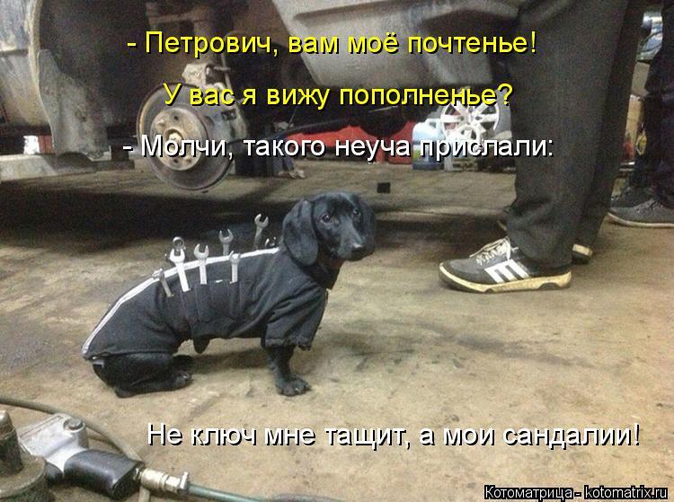 Котоматрица: - Петрович, вам моё почтенье! У вас я вижу пополненье? - Молчи, такого неуча прислали: Не ключ мне тащит, а мои сандалии!
