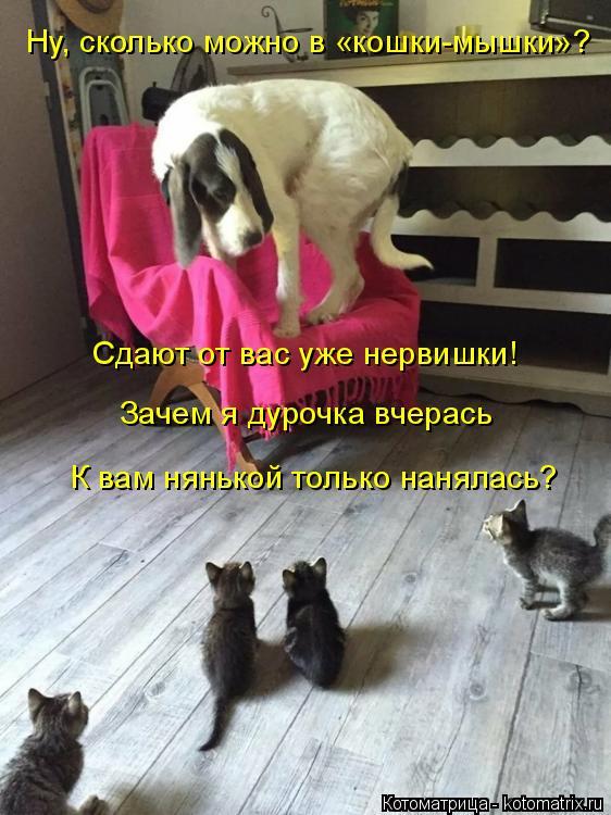 Котоматрица: Ну, сколько можно в «кошки-мышки»? Сдают от вас уже нервишки! Зачем я дурочка вчерась К вам нянькой только нанялась?