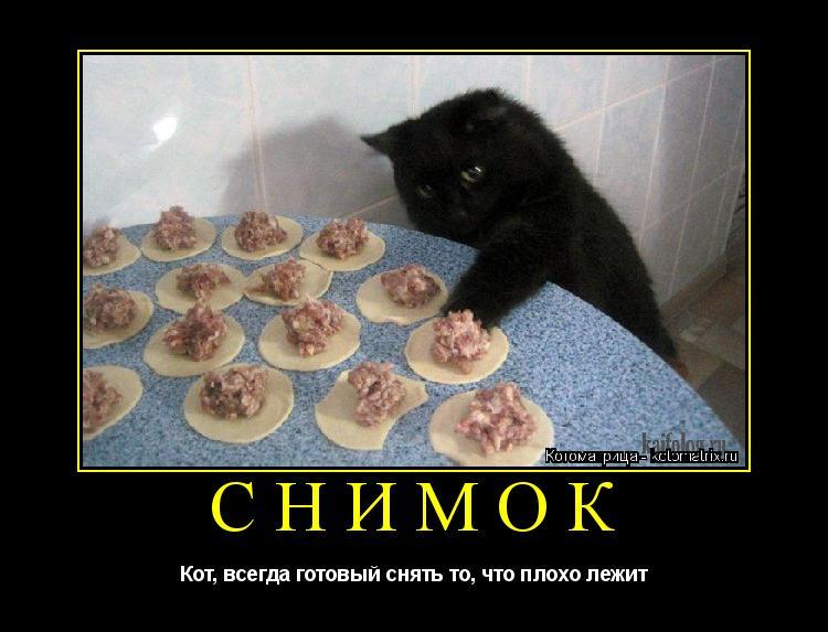 Котоматрица: СНИМОК Кот, всегда готовый снять то, что плохо лежит