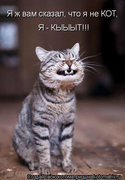 Котоматрица: Я ж вам сказал, что я не КОТ, Я - КЫЫЫТ!!!
