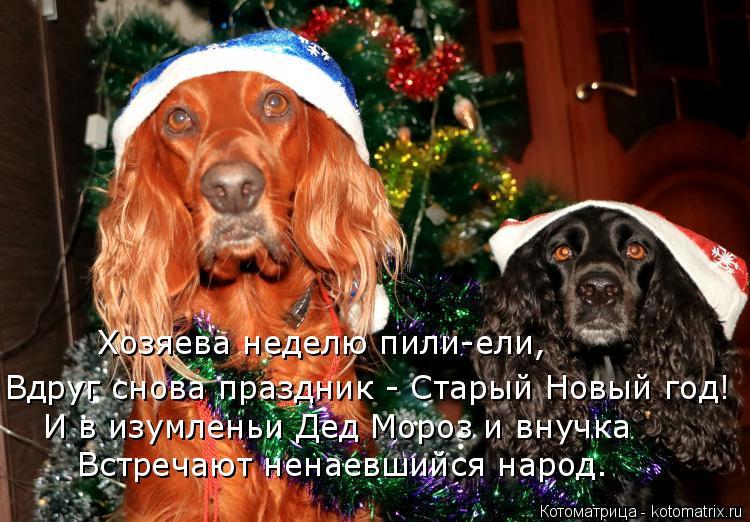 Котоматрица: Хозяева неделю пили-ели, Вдруг снова праздник - Старый Новый год! И в изумленьи Дед Мороз и внучка Встречают ненаевшийся народ.