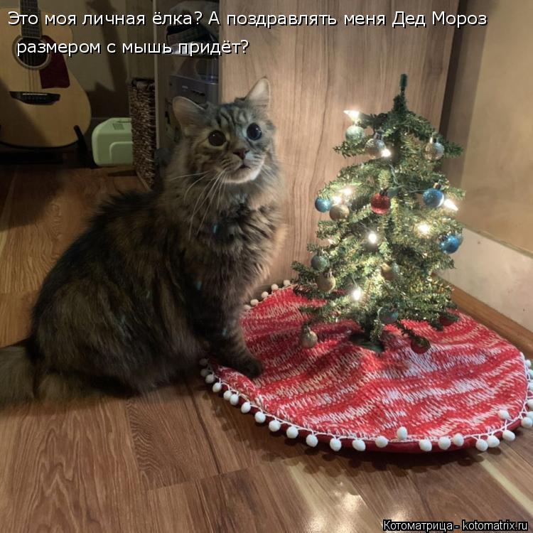 Котоматрица: Это моя личная ёлка? А поздравлять меня Дед Мороз размером с мышь придёт?