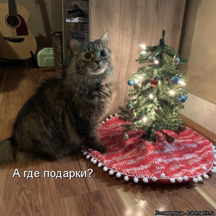 Котоматрица: А где подарки?
