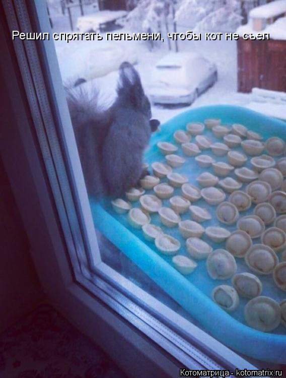 Котоматрица: Решил спрятать пельмени, чтобы кот не съел