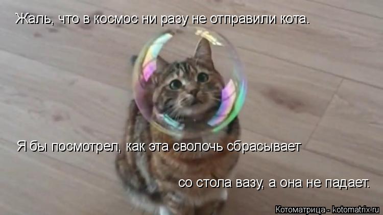 Котоматрица: Жаль, что в космос ни разу не отправили кота. Я бы посмотрел, как эта сволочь сбрасывает со стола вазу, а она не падает.