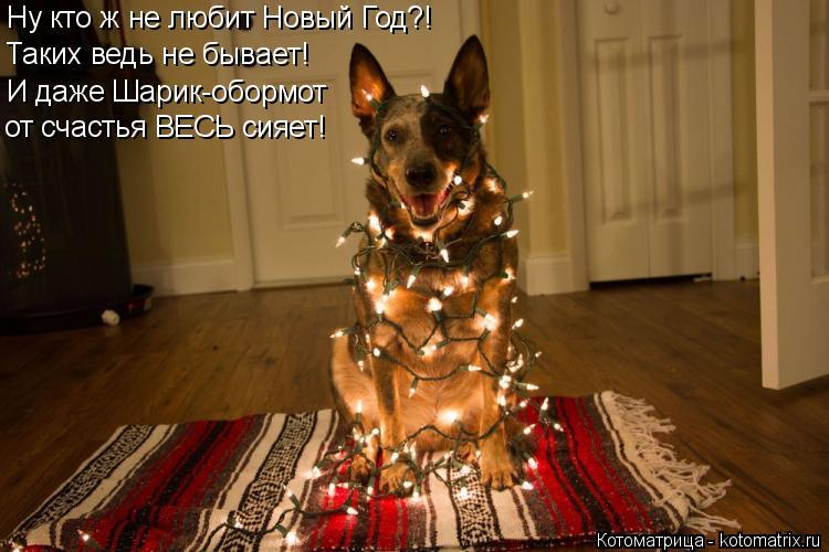 Котоматрица: Таких ведь не бывает! И даже Шарик-обормот Ну кто ж не любит Новый Год?! от счастья ВЕСЬ сияет!