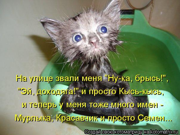 """Котоматрица: На улице звали меня """"Ну-ка, брысь!"""", """"Эй, доходяга!"""" и просто Кысь-кысь, и теперь у меня тоже много имен -  Мурлыка, Красавчик и просто Семен..."""