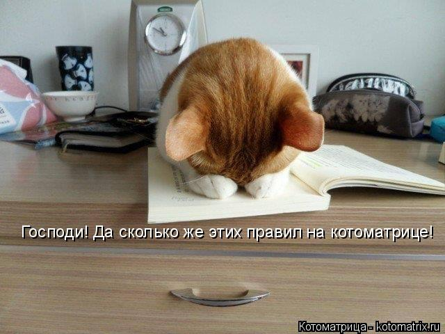 Котоматрица: Господи! Да сколько же этих правил на котоматрице!