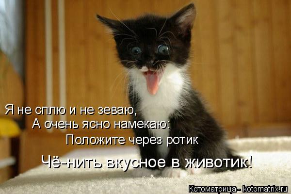 Котоматрица: Я не сплю и не зеваю,  А очень ясно намекаю:  Положите через ротик  Чё-нить вкусное в животик!