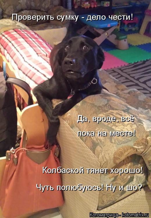 Котоматрица: Проверить сумку - дело чести! Да, вроде, всё пока на месте! Колбаской тянет хорошо! Чуть полюбуюсь! Ну и шо?