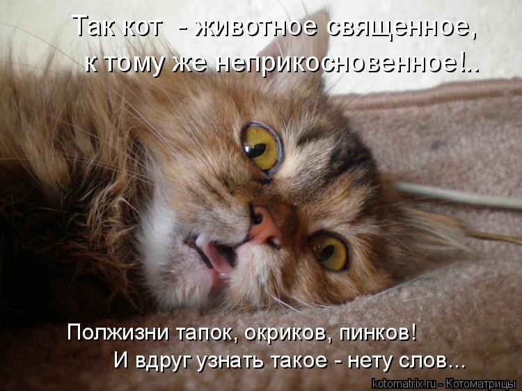 Котоматрица: Так кот  - животное священное, к тому же неприкосновенное!.. И вдруг узнать такое - нету слов... Полжизни тапок, окриков, пинков!