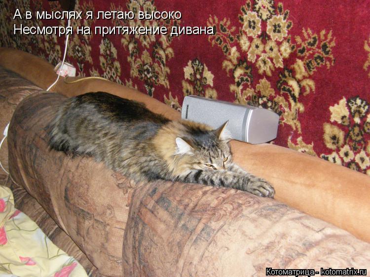 Котоматрица: А в мыслях я летаю высоко А в мыслях я летаю высоко Несмотря на притяжение дивана Несмотря на притяжение дивана
