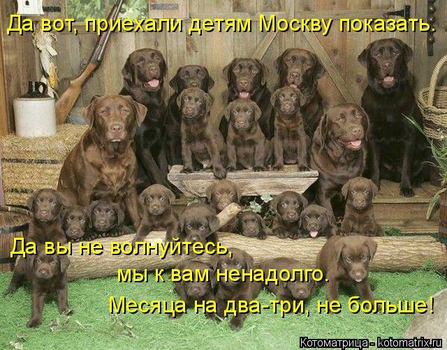 Котоматрица: Да вот, приехали детям Москву показать. Да вы не волнуйтесь, мы к вам ненадолго.  Месяца на два-три, не больше!