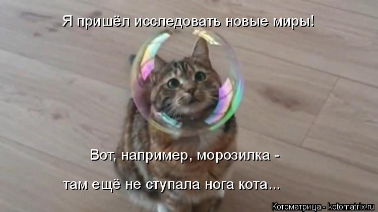 Котоматрица: Я пришёл исследовать новые миры! Вот, например, морозилка -  там ещё не ступала нога кота...
