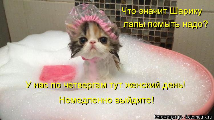 Котоматрица: Что значит Шарику лапы помыть надо? У нас по четвергам тут женский день! Немедленно выйдите!