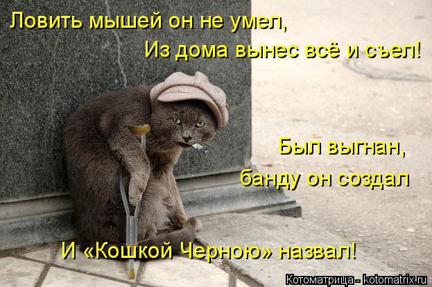 Котоматрица: Ловить мышей он не умел, Из дома вынес всё и съел! Был выгнан, банду он создал И «Кошкой Черною» назвал!