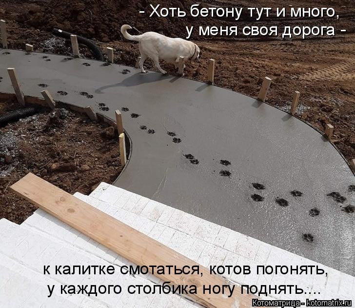 Котоматрица: - Хоть бетону тут и много,  у меня своя дорога -   к калитке смотаться, котов погонять,  у каждого столбика ногу поднять....