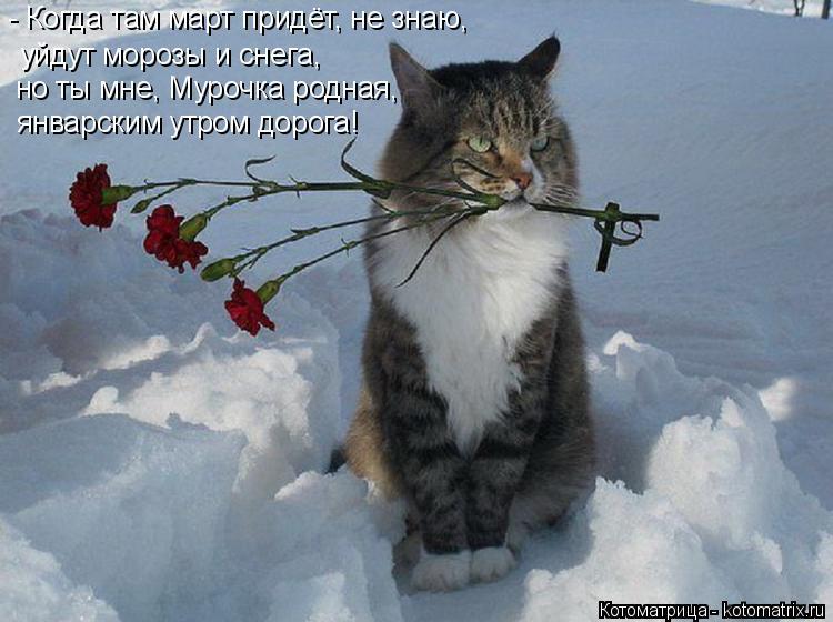 Котоматрица: - Когда там март придёт, не знаю, но ты мне, Мурочка родная, январским утром дорога! уйдут морозы и снега,
