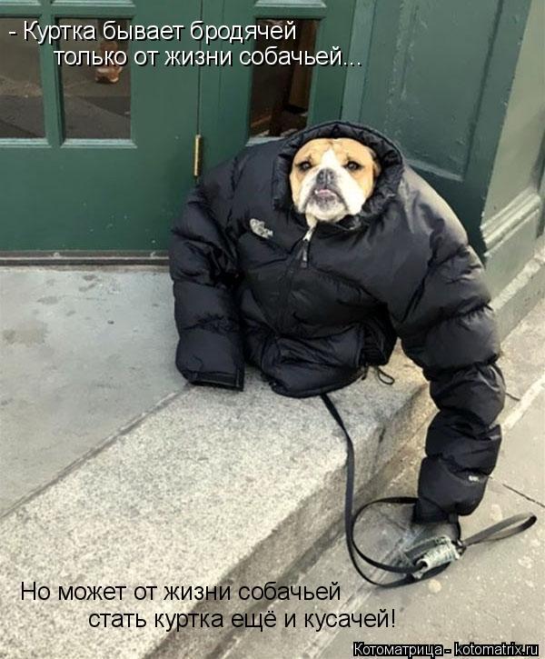 Котоматрица: - Куртка бывает бродячей только от жизни собачьей... Но может от жизни собачьей стать куртка ещё и кусачей!