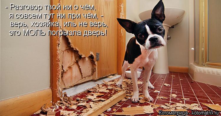Котоматрица: - Разговор твой ни о чём, я совсем тут ни при чём, - верь, хозяйка, иль не верь, это МОЛЬ погрызла дверь!