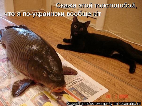 Котоматрица: Скажи этой толстолобой,  что я по-украински вообще кіт