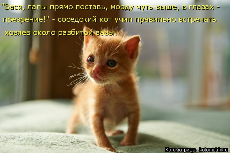 """Котоматрица: """"Вася, лапы прямо поставь, морду чуть выше, в глазах - презрение!"""" - соседский кот учил правильно встречать  хозяев около разбитой вазы."""