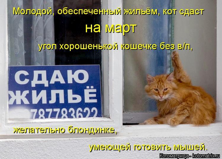 Котоматрица: Молодой, обеспеченный жильём, кот сдаст  на март  угол хорошенькой кошечке без в/п,  желательно блондинке, умеющей готовить мышей.