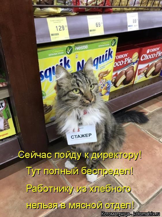 Котоматрица: Сейчас пойду к директору! Тут полный беспредел! Работнику из хлебного нельзя в мясной отдел!