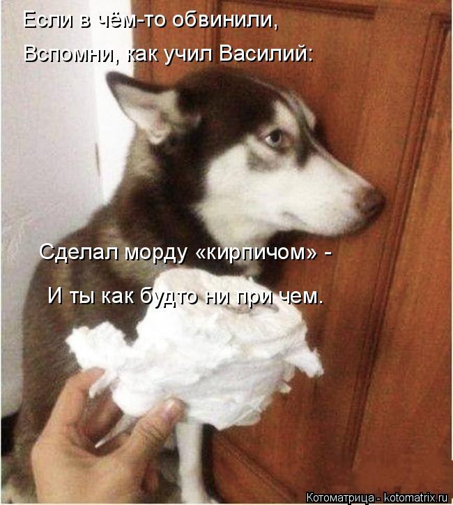 Котоматрица: Если в чём-то обвинили, Вспомни, как учил Василий:  Сделал морду «кирпичом» -  И ты как будто ни при чем.