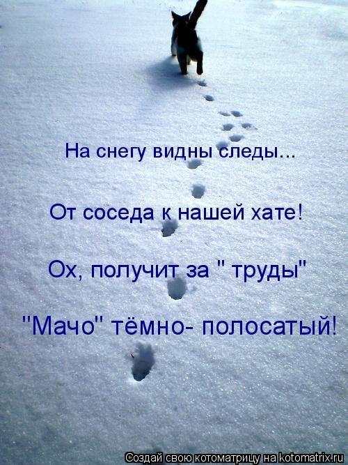 """Котоматрица: На снегу видны следы... От соседа к нашей хате! Ох, получит за """" труды"""" """"Мачо"""" тёмно- полосатый!"""
