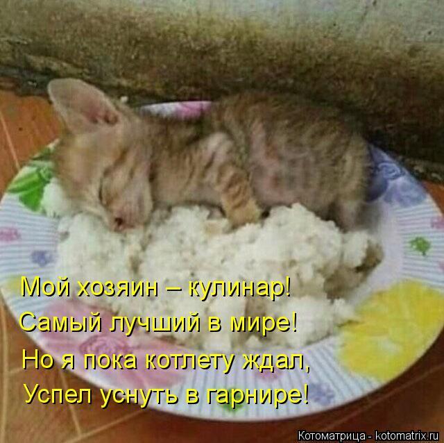 Котоматрица: Мой хозяин – кулинар! Самый лучший в мире! Но я пока котлету ждал, Успел уснуть в гарнире!