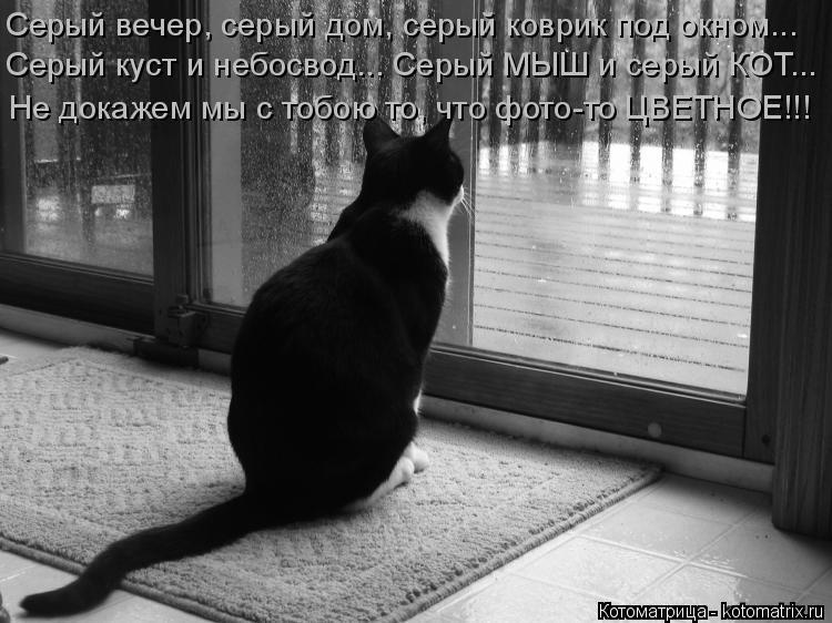 Котоматрица: Серый вечер, серый дом, серый коврик под окном...  Серый куст и небосвод... Серый МЫШ и серый КОТ...  Не докажем мы с тобою то, что фото-то ЦВЕТНОЕ!