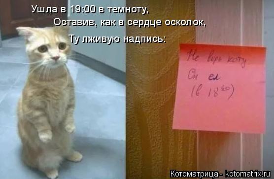 Котоматрица: Ушла в 19:00 в темноту, Оставив, как в сердце осколок, Ту лживую надпись: