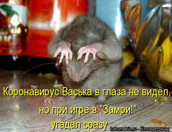 "Котоматрица: Коронавирус Васька в глаза не видел, но при игре в ""Замри!"" угадал сразу"