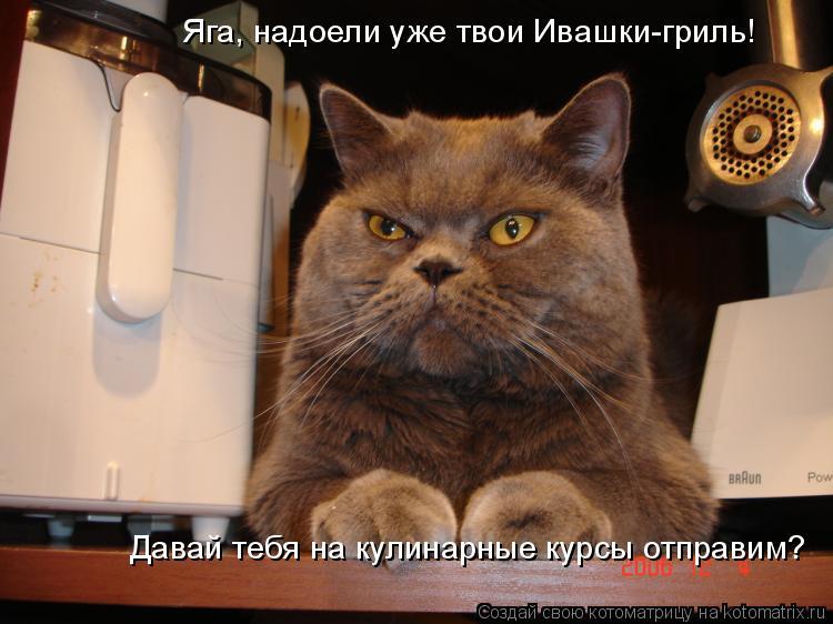 Котоматрица: Яга, надоели уже твои Ивашки-гриль!  Давай тебя на кулинарные курсы отправим?