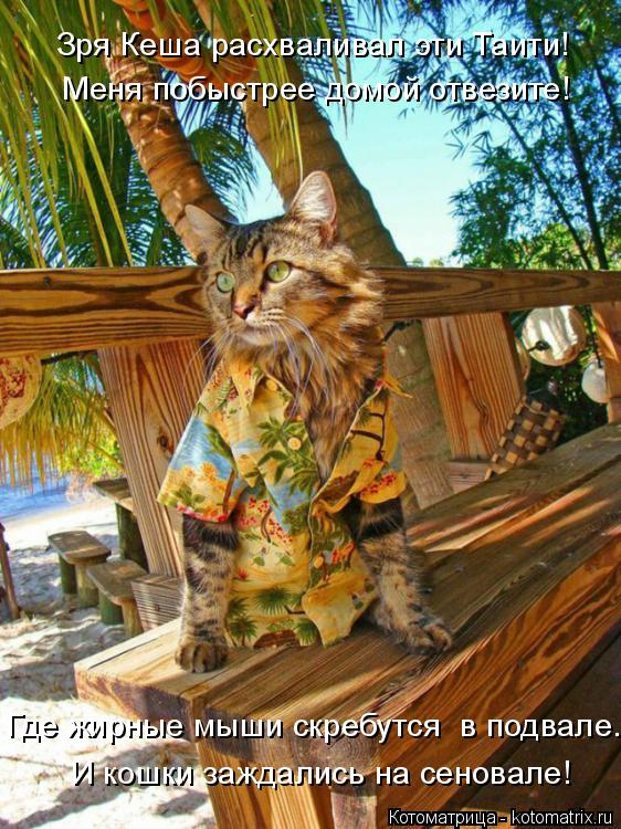 Котоматрица: Зря Кеша расхваливал эти Таити! Меня побыстрее домой отвезите! И кошки заждались на сеновале! Где жирные мыши скребутся  в подвале.