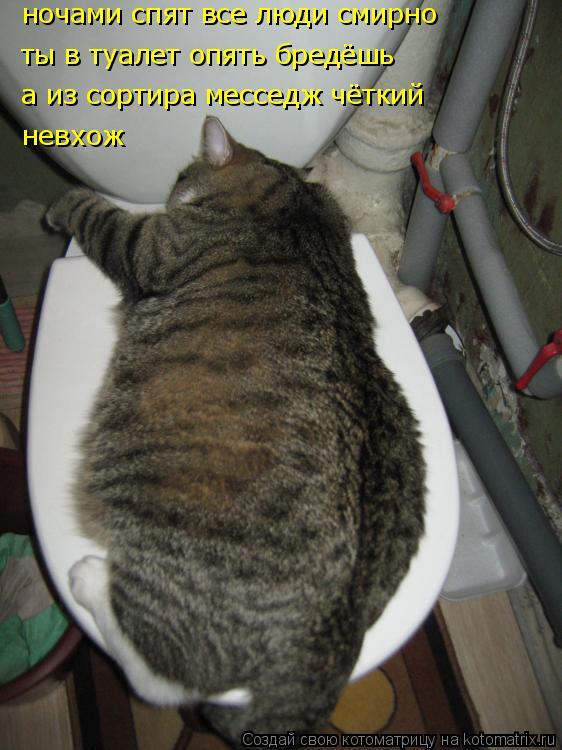 Котоматрица: ночами спят все люди смирно ты в туалет опять бредёшь а из сортира месседж чёткий невхож