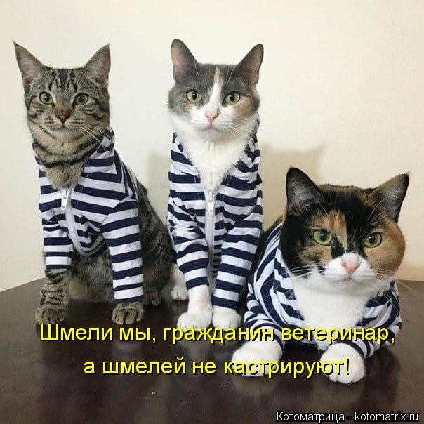 Котоматрица: Шмели мы, гражданин ветеринар, а шмелей не кастрируют!